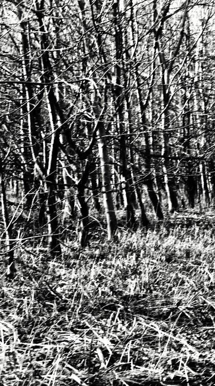 woods2_edited-1